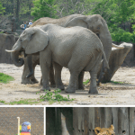 An insider's guide to the Cleveland Zoo