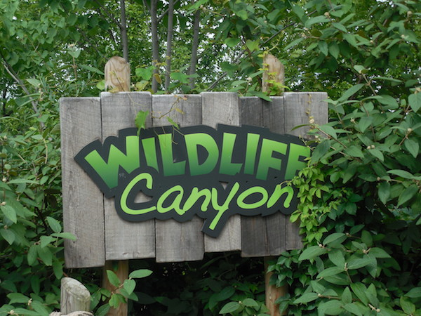 We Started Our Cincinnati Zoo Adventure At Wildlife Canyon. Here, We Saw  The Warty Pig, Camels, The Przewalskiu0027s Horse, The Takin, And The Capybara.