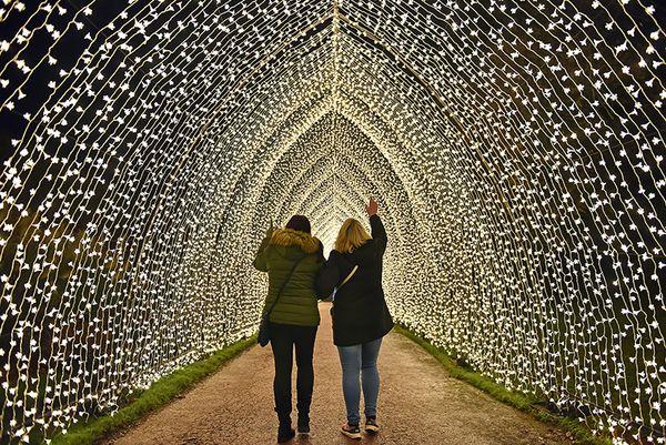 Christmas at Bedgebury Illuminations