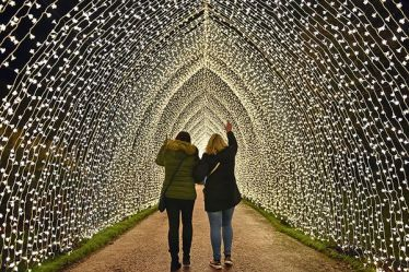 Christmas at Bedgebury Illuminations