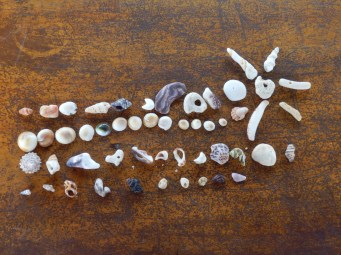 The beaches were full of coral and shells.