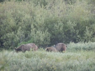 Bear bottoms. No one was going to tell these grizzlies to pose.