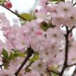 桜、花見名所穴場情報関連