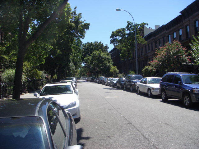 Park Slope trees 2