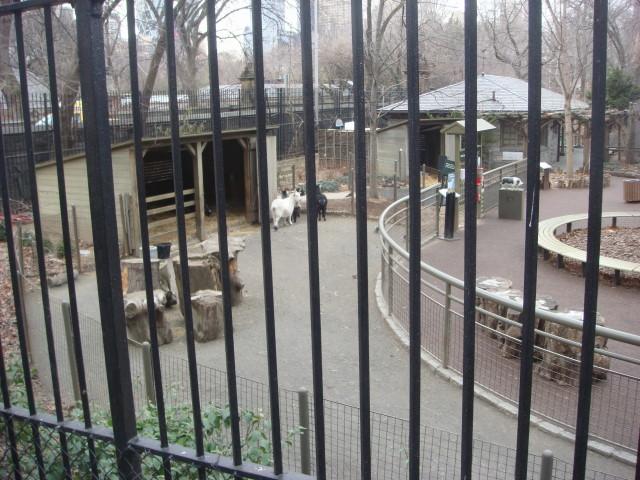 20080126-central-park-zoo-01-near-66th-street.jpg