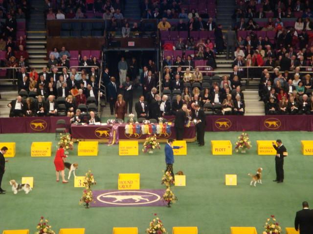 20080211-westminster-20-hound-group-finals.jpg