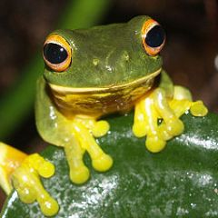 Frogs, a poem by Red Skelton, recited by Clem Kadiddlehopper