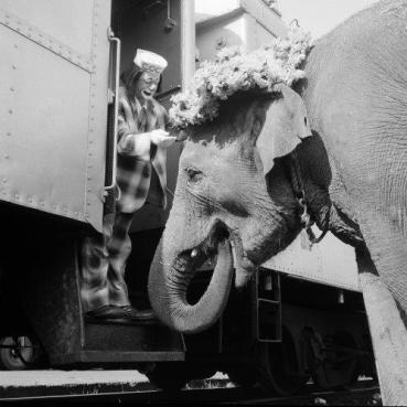 Coco (Michael Polakovs) with an elephant thats wearing an Easter bonnet