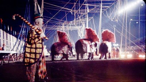 Color photo of Paul Jung with elephants in the circus ring