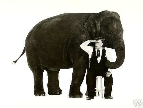 Buster Keaton looking for an elephant ...