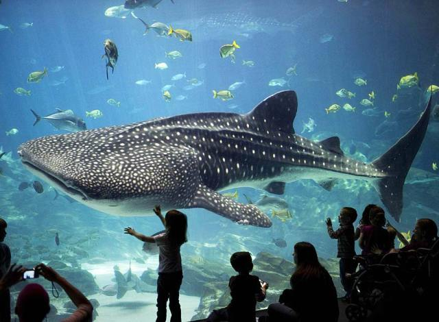 Image result for aquariums