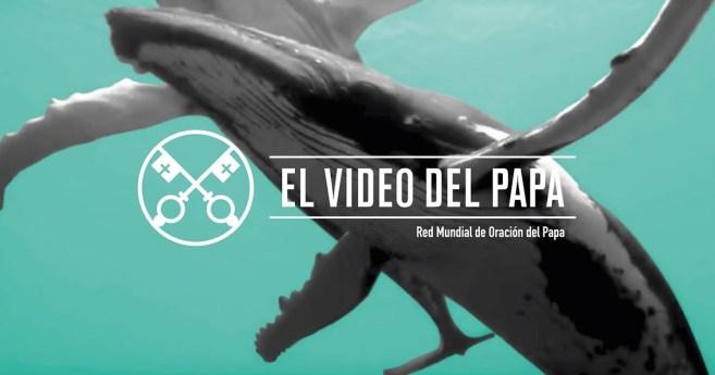 «El vídeo del Papa»: La protección de los océanos (septiembre de 2019) VERSIÓN EXTENDIDA