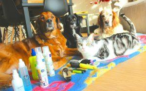 Aide aux soins sur vos animaux