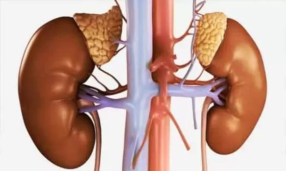 Tipos de hormônios esteroides no corpo humano