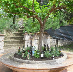 Our Wine Garden In Umbria
