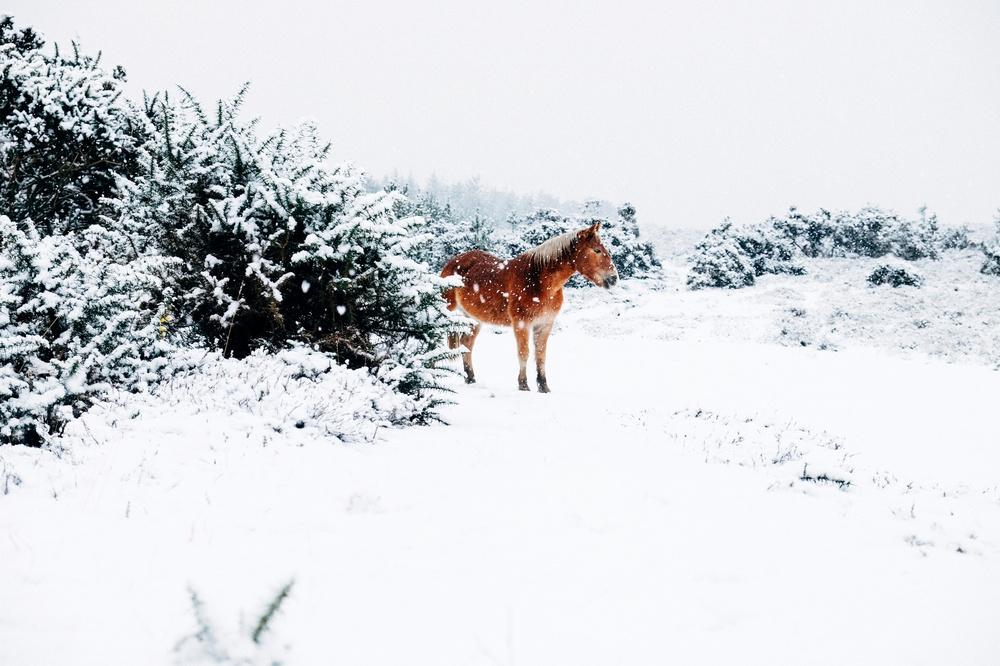 Winter-74