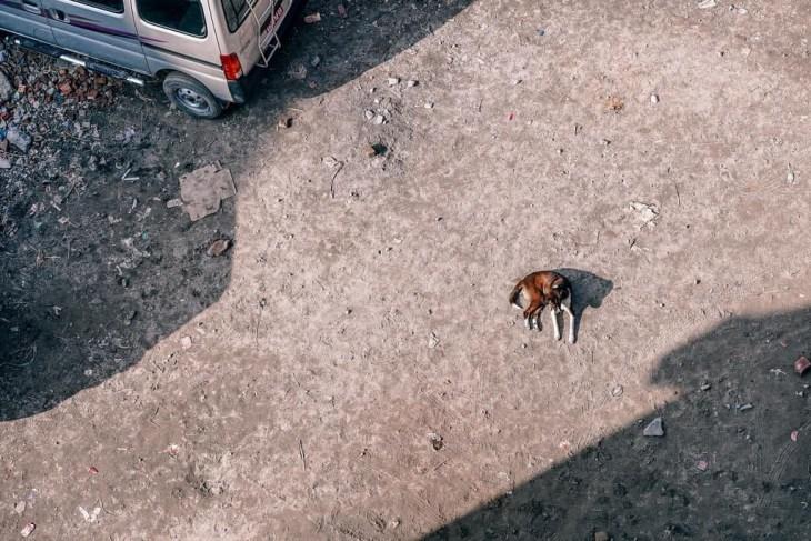 Mellow-Doggie-1