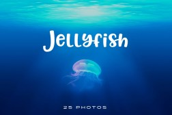 Jellyfish-Photo-pack