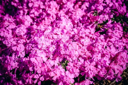april-background-balmy-beautiful