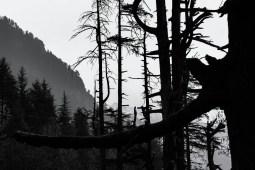 Dark-Forest