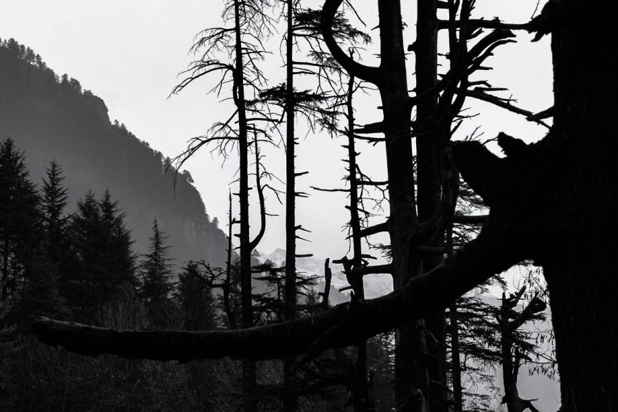 Winter landscape in black and white.