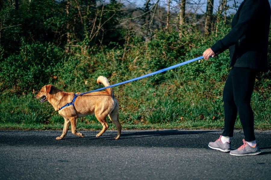 Woman-Walking-Her-Dog