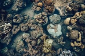 Exposed-Corals