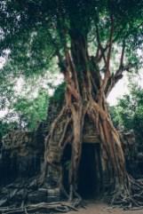 Massive-Roots-1