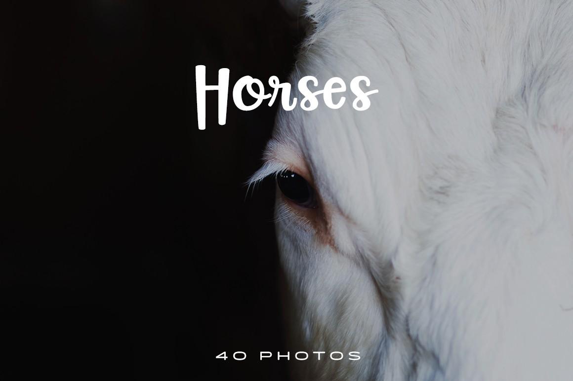 40 Free Stock Photos Of Beautiful Horses Fancycrave