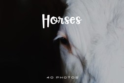 Beautiful Horse Photo Pack