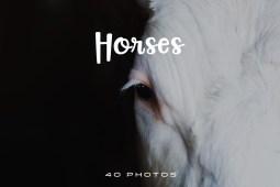 Beautiful Horse Photo Pack