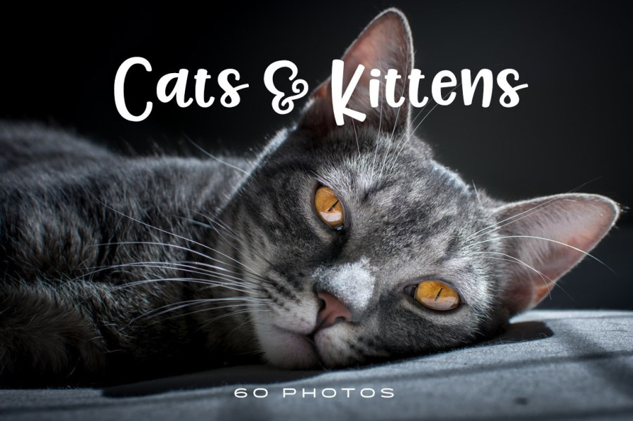 Cats-and-Kittens