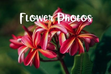 Flower-Photos