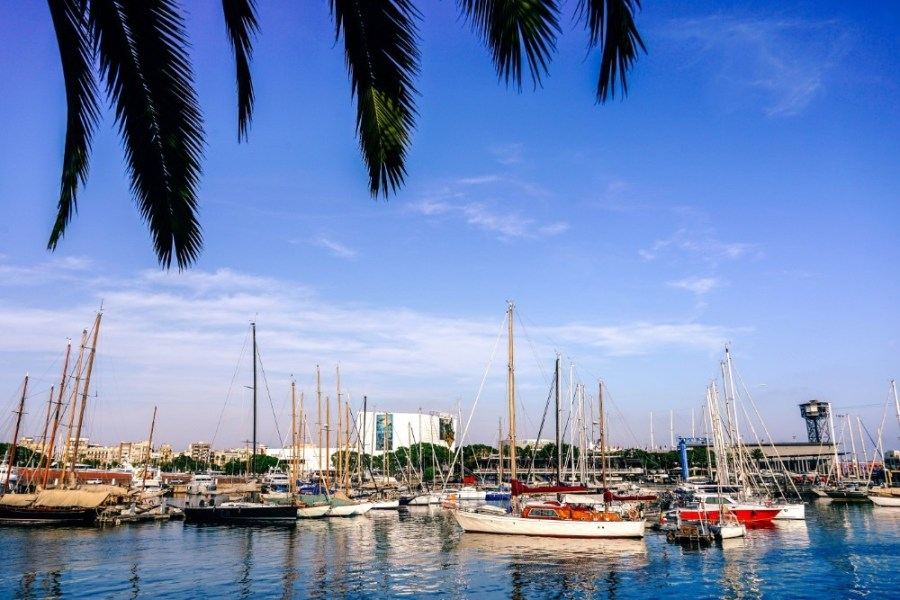 Barcelona-Marina-on-a-Sunny-Day-Photographed-Behind-Palm-Tree-Leaves