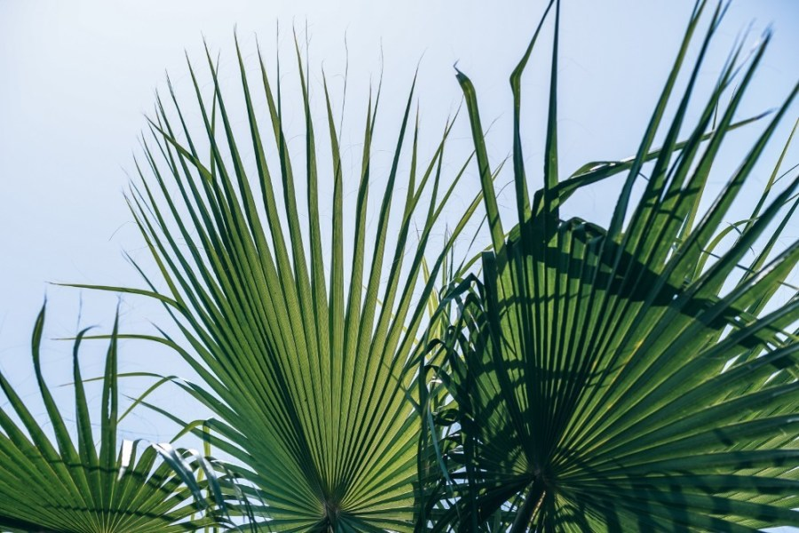 Stunning-Green-Leaves-with-different-Shades-and-the-Sky-in-the-Background