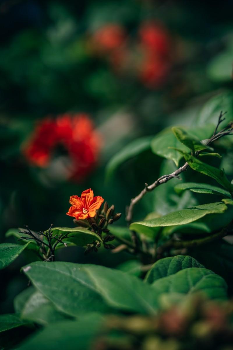 Beautiful-Orange-Tropical-Flower-Shining-Among-Green-Leaves