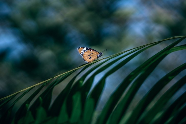 Orange-and-Yellow-Butterfly-on-a-Tree-Branch