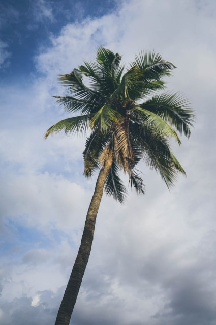Tall-Palm-Tree-Photographed-from-Below