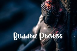 Buddha Photos