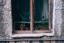 Old-Wooden-Window-with-Plants-on-the-inside