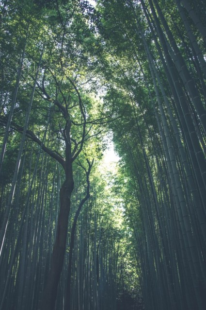 Stunning-Bamboo-Forest-in-Kyoto-Japan