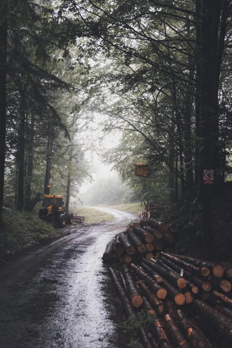 tree-logs-on