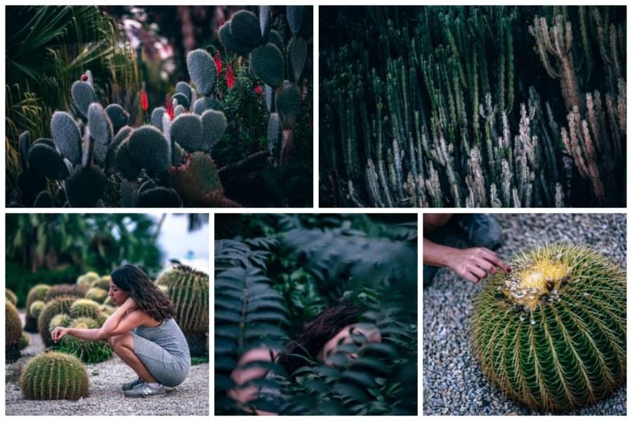 Cactus-Park-Preview