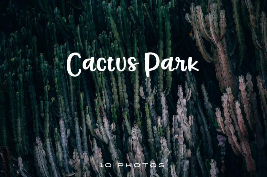 Cactus-park-1024x681