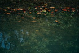 Colorful-Leaves-in-a-Small-Pond-at-the-Bardiya-National-Park