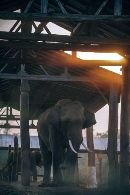 Elephant-Nursery-at-a-Nepali-Village
