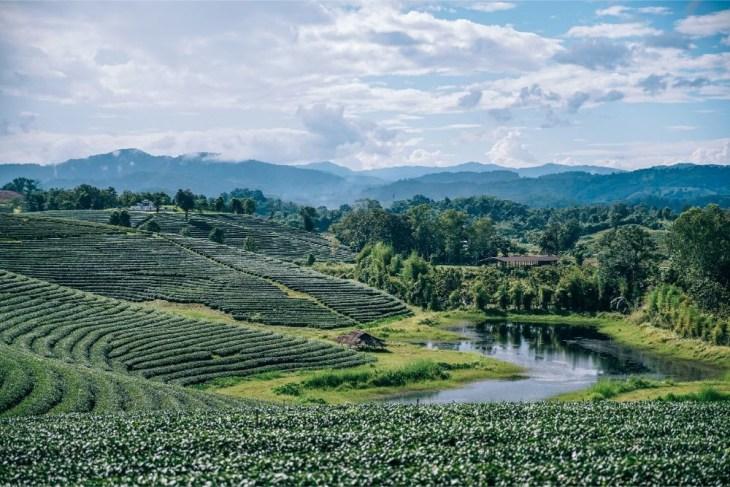 Small-Lake-at-the-Choui-Fong-Tea-Plantation