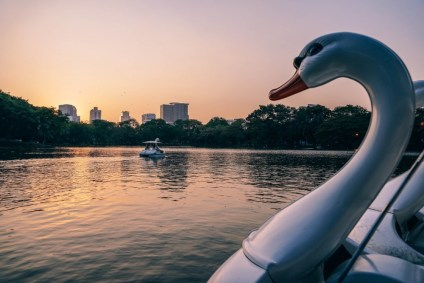Swan-Paddle-Boat-with-the-Beautiful-Sunset-over-the-Lumphini-Park-in-the-Background