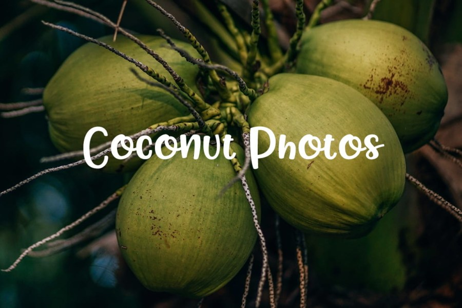 Coconut-Photos