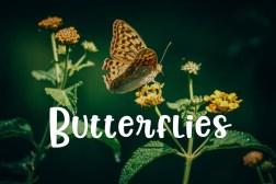 Butterflies-min